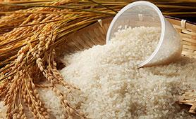 精米機のおすすめ8選【2019】お米の劣化を防いで家庭で気軽においしいご飯を楽しもう