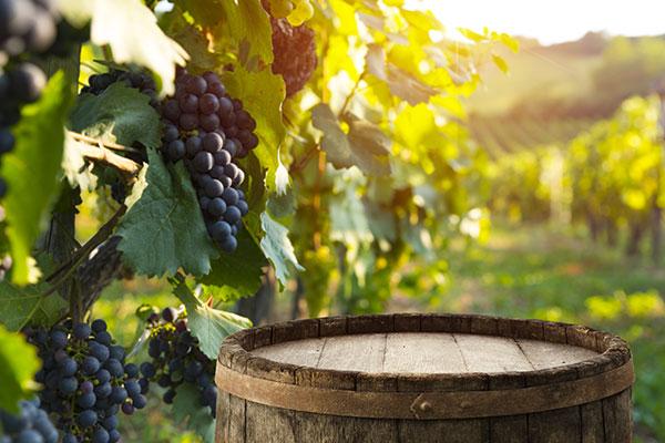 ワイン選びのポイント ブドウの産地で選ぶ